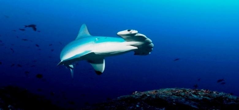 A Copert. Hummer shark coco (FILEminimizer)